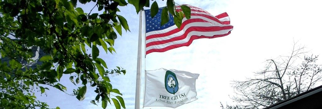 "American Flag and ""Tree City USA"" Flag Waving on Flagpole"