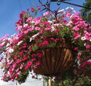 Hanging Flower Basket Full of Pink and White Flowers
